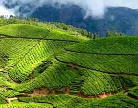 kerala tour package for couple from chennai